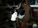 Decoratie koeienkop kunststof